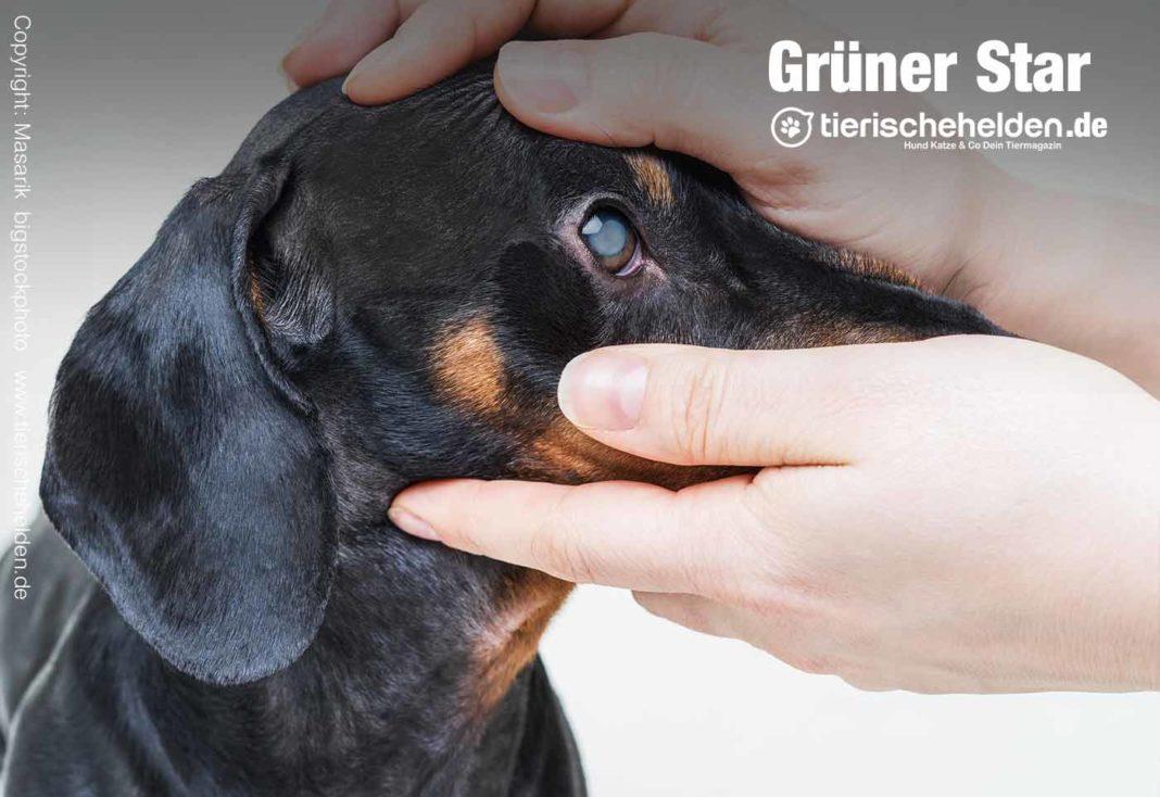 Augenkrankheit beim Hund