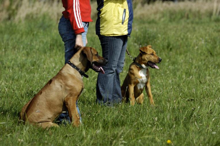 gebrauchshundeprüfung
