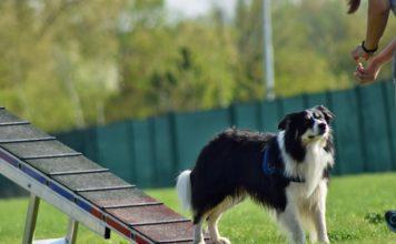 Hundesport, Agility