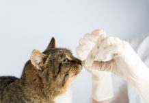 Bronchitis bei Katzen