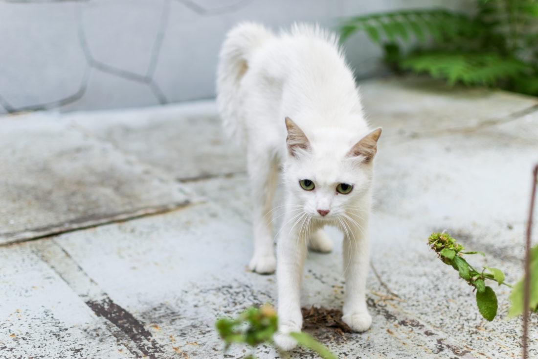 Körper Signale der Katze