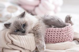 Schlafplatz für deine Katze