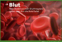 Organ Blut / Bestandteile und Aufgaben bei Tieren