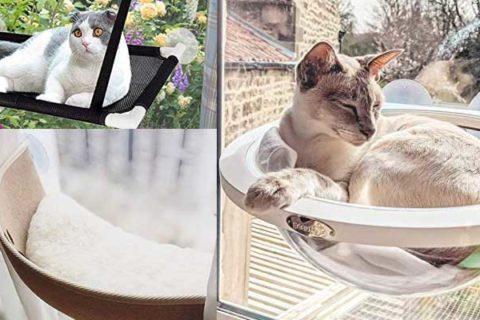 Fensterplatz an der Scheibe für Katzen