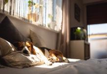 Was hilft Hunden bei Hitze