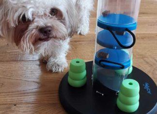 Intelligenzspielzeug für Hunde im Test