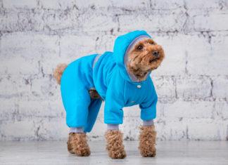 Kapuzenpullis für Hunde