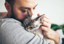 Katzen schnurren