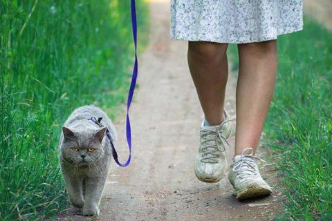 Katze mit Leine