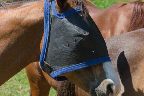 Fliegenkopschutz für Pferde