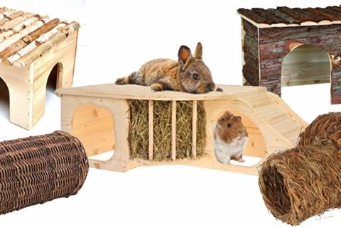 kaninchen Haus