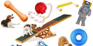 besten Spielzeuge für Hunde
