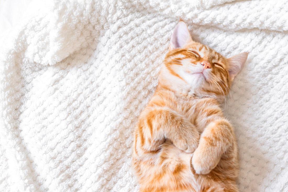 Orthopädische Katzenbett
