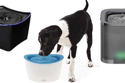 Trinkbrunnen für Hunde