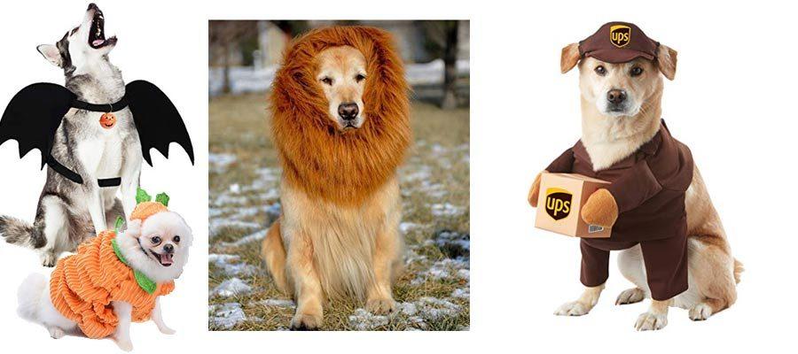 besten Kostüme für Hunde