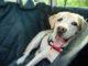 Sitzerhöhung für Hunde