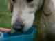 Trinkflasche für Hunde für unterwegs
