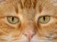 Katzenpupillen