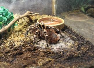 Terrarium Zubehör Spinnen